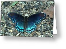 Red Spotted Purple Swallowtail Butterfly Greeting Card
