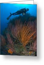 Red Whip Fan Coral With Diver, Papua Greeting Card