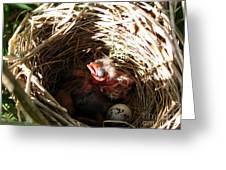 Red-winged Blackbird Babies And Egg Greeting Card