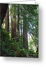 Redwoods Sequoia Sempervirens Greeting Card