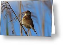 Reed Warbler Greeting Card