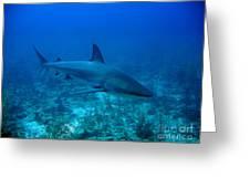 Reef Shark Greeting Card