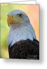 Regal Eagle Greeting Card