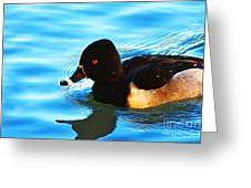 Ringbill Duck Greeting Card