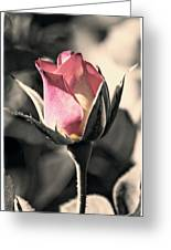 Rita Rosebud Pink Greeting Card