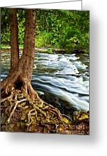 River Through Woods Greeting Card