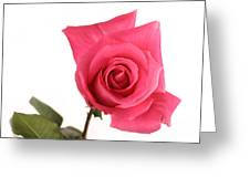 Rose Blooming Greeting Card