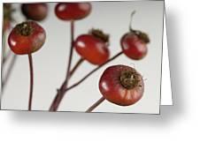 Rose Hips Rosa Rugosa Greeting Card