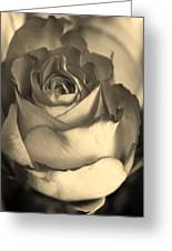 Rose In Sepia Greeting Card
