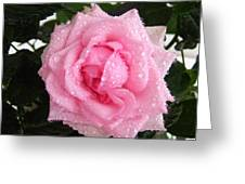 Rose With Droplets And Green Leaves Greeting Card