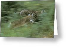 Running Lynx Greeting Card
