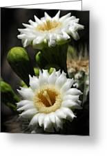 Saguaro Blooms  Greeting Card