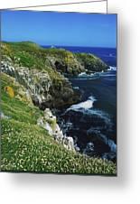 Saltee Islands, Co Wexford, Ireland Greeting Card