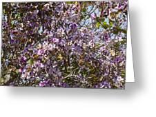 Saucer Magnolia Or Tulip Tree Magnolia X Soulangeana Greeting Card