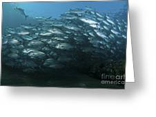 School Of Trevally Swimming By, Bali Greeting Card