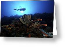 Scuba Diver Swims By Some Large Sponges Greeting Card