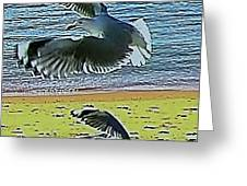 Sea Gulls In Flight  Greeting Card