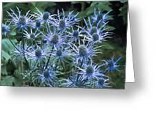 Sea Holly (eryngium X Oliverianum) Greeting Card