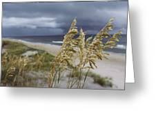 Sea Oats Uniola Panicolata Help Anchor Greeting Card by David Alan Harvey