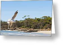 Seagull Spreads Its Wings On The Beach Greeting Card