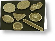Selection Of Diatoms, Sem Greeting Card by Steve Gschmeissner