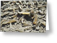 Selenite Crystals On A Dried Lake Bed Greeting Card