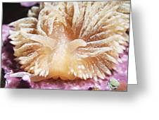 Shaggy Mouse Nudibranch Greeting Card by Alexander Semenov