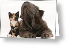 Shar Pei Puppy And Tortoiseshell Kitten Greeting Card