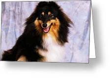 Shetland Sheepdog Portrait Of A Dog Greeting Card