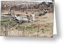 Short Eared Owl In Flight Greeting Card