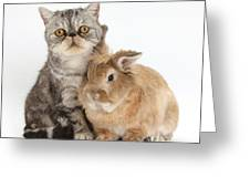 Silver Tabby Cat And Lionhead-cross Greeting Card