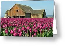 Skagit Valley Washington Greeting Card