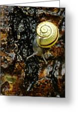 Snail, Pointe-des-cascades, Quebec Greeting Card
