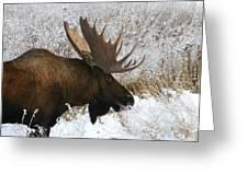 Snow Bull Greeting Card