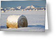 Snow-covered Hay Bales Okotoks Greeting Card