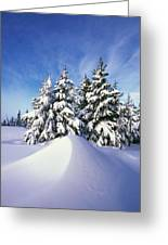 Snow-covered Pine Trees Greeting Card