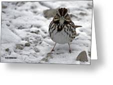 Snow Sparrow Greeting Card