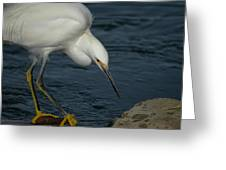 Snowy Egret 8 Greeting Card