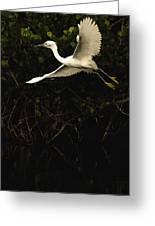 Snowy Egret, Florida Greeting Card