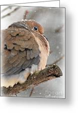 Snowy Mourning Dove Greeting Card