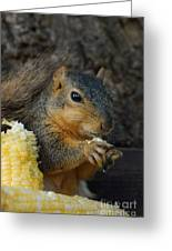 So Much Sweet Corn So Little Time Greeting Card
