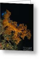Soft Coral Seascape, Fiji Greeting Card