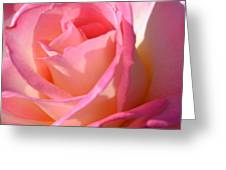 Soft  Rose Greeting Card