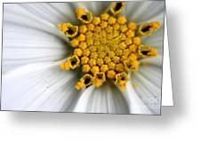 Sonata Cosmos White Greeting Card