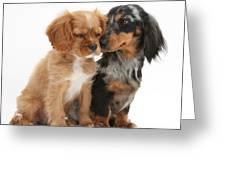 Spaniel & Dachshund Puppies Greeting Card