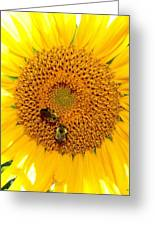 Spider And The Bees Greeting Card