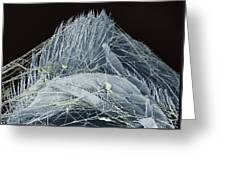 Spider's Web, Sem Greeting Card
