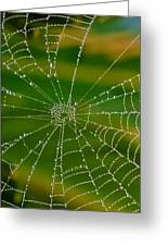 Spiderweb With Dew Drops Greeting Card