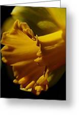 Splash Of Yellow Greeting Card