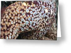 Spotted Starfish Greeting Card